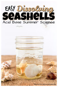 dissolving seashell beach activities for kids