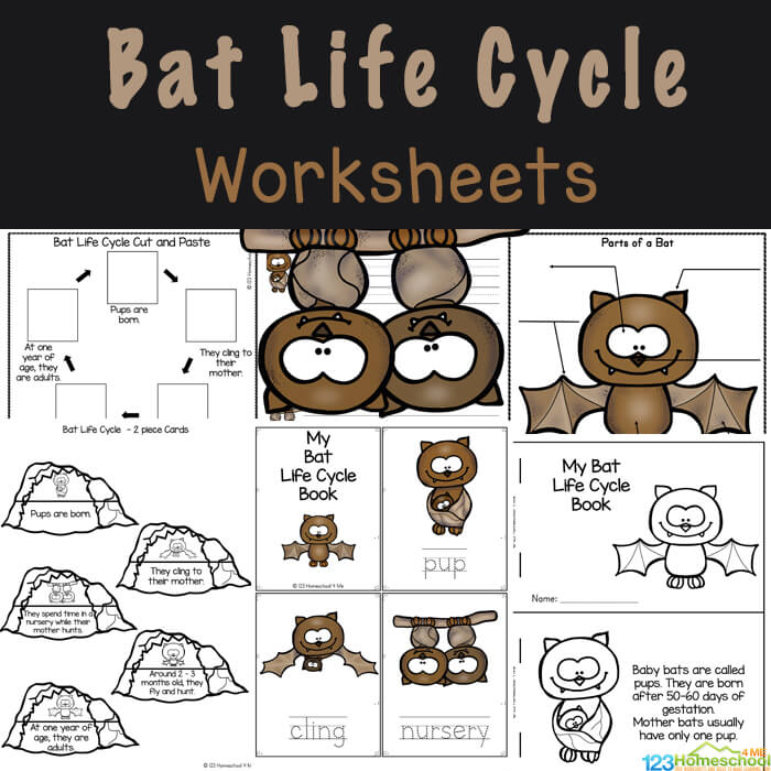 Learn about the life cycle of a bat with these FREE Bat Life Cycle Worksheets. Students will love learning about life cycles &bats for kids!
