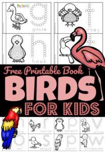birds for preschoolers