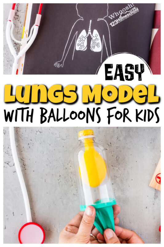 This fun, hands-onlungs for kids lesson will help you make a workinglungs model for kidsusing a plastic bottle and balloon. Thishuman body for kids project is great for kindergarten, first grade, 2nd grade, 3rd grade, 4th grade, 5th grade, 6th garde, and 7th grade students. We will show youhow to make a lung modelthat will help children understand how this important organ works with ahuman body activity for kids!