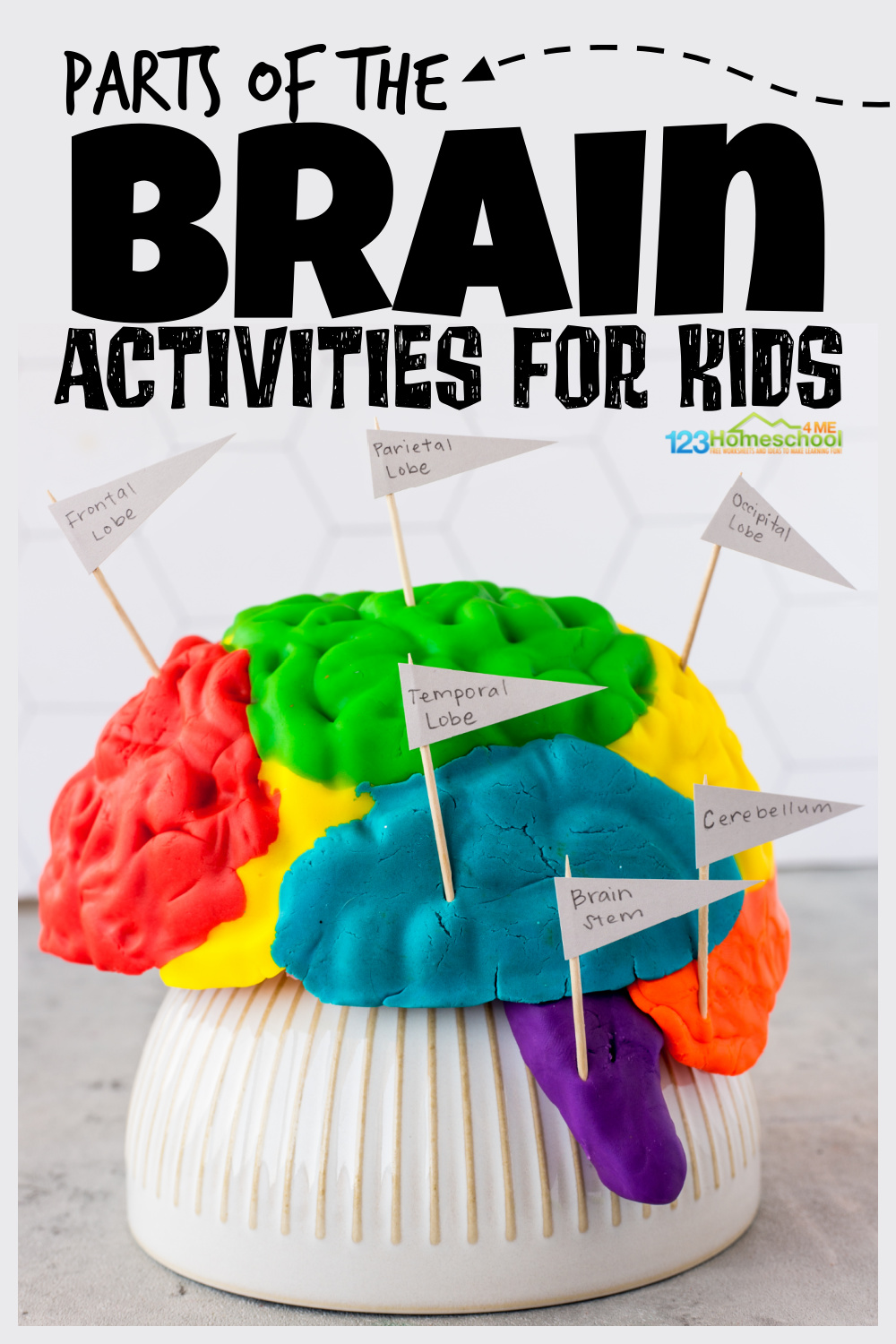 Learn the parts of the brain for kids with a funbrain activity and FREE printable brain worksheets! Clever human body activities for kids!