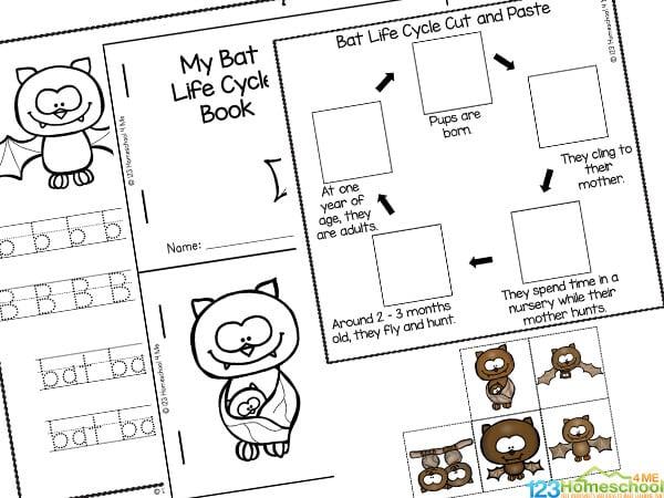 bat life cycle printable worksheets for kids