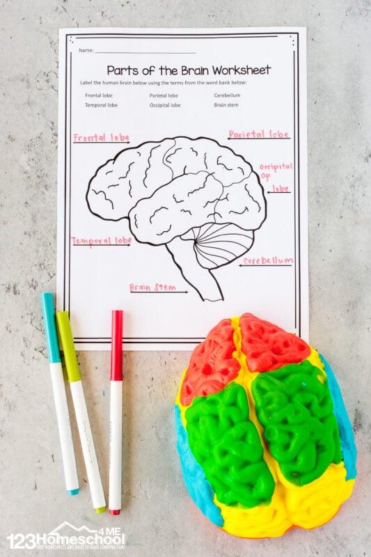 human body printable worksheets for kids