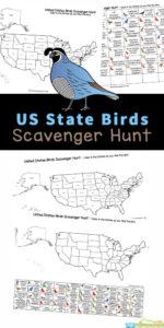 Kids will enjoy searching for the state birds of each of the 50 states of the United States Printables with this fun and free State Bird Scavenger Hunt. This state bird printable allows kids to enjoy bird watching as they hunt for these state symbols! This usa scaenger hunt is fun for toddler, preschool, pre-k, kindergarten, first grade, 2nd grade, and 3rd grade students. Use thisprintable scavenger hunt on a family roadtrip, at a local aviary, in your backyard, or reading through books about the states of America. Simply print thestate birds listwith the free united states map pdf file in color or black and white and you are ready to play!