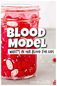 If you are learning about thehuman body for kids you have probably explores the bones, muscles, and important organs like the heart, brain, and lungs. Now it's time to exploreblood for kids! This hands-on activity and EASYblood model is a great visual ofwhat makes up blood while being a sillyblood activity for kids at the same time! Your preschool, pre-k, kindergarten, first grade, 2nd grade, 3rd grad, 4th grade, 5th grade, and 6th graders will love thishuman body activity for kids!