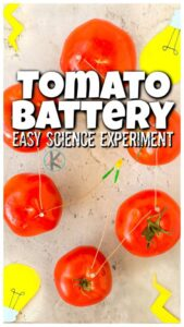 Tomato-Battery electricity experiment for kids