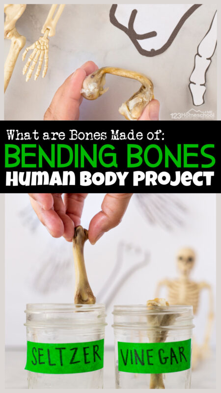 You've probably heard your mother tell you to eat or drink something to make sure you have strong bones. And having strong bones is super important because ourskeletal system for kid holds up our body and allows us to move. But what do you know about yourbones for kids? Kids of all ages will be amazed by this simple vinegar experimentbending bones! Thishuman body project for kids is perfect for preschool, pre-k, kindergarten, first grade, 2nd grade, 3rd grade, 4th grade, 5th grade, and 6th graders too.