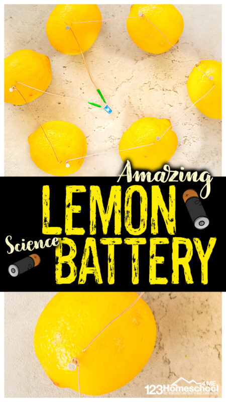 Did you know you can create your own electricity from fruit? Yep! In this amazignlemon battery your children will use a couple simple materials to make alemon powered light. Thislemon battery experimentis perfect for kindergarten, first grade, 2nd grade, 3rd grade, 4th grade, 5th grade, and 6th grade students to explore creating a circuit. Except in this case, we will get ourelectricity from lemon power! This electricity experiment for kidsis sure to amaze and delight kids of all ages!