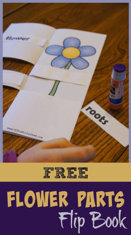 This parts of a plant flip book is such a fun way for kids to learn about the different parts of a flower in a fun, interactive way. Thisflower flip book is perfect for toddler, preschool, pre-k, kindergarten, first grade, and 2nd grade students. Simply print pdf file withplant flip book and you are ready to play and learn about flowers in your nextflower theme,plant theme, orbotany lesson for kids.