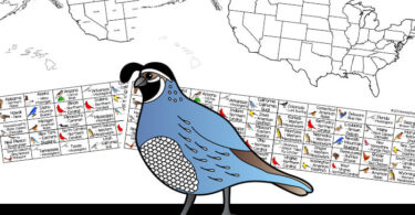 Go bird watching and learn about USA state symbols with this printable bird scavenger hunt. Includes printable US map with state bird list.