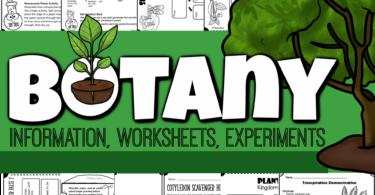 Plant Lesson for Kids
