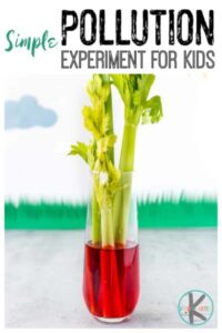 water pollution for kids science experiment with celery