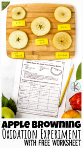 apple oxidation experiment