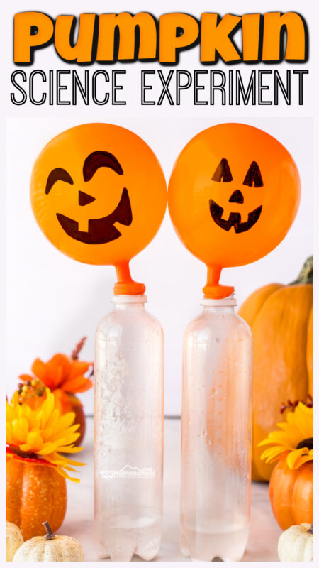 Simplepumpkin science experiment will allow children to use a chemical reaction to quickly grow a silly Jack-o-Lantern Pumpkin.