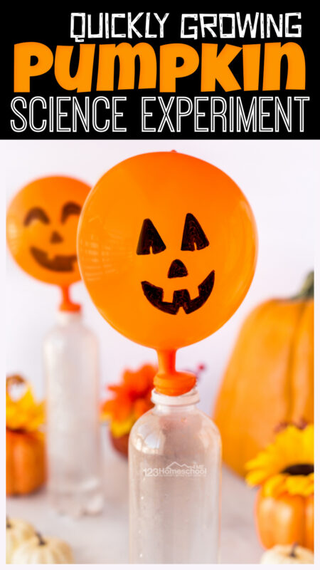While most pumpkin take 90 to 120 days to grow, this simplepumpkin science experiment will allow children to use a chemical reaction to quickly grow a silly Jack-o-Lantern Pumpkin. You will love that these quick and EASYpumpkin activities use common household items. Thisbaking soda and vinegar experiment for October is perfect for preschool, pre-k, kindergarten, first grade, 2nd grade, 3rd grade, and 4th graders too.