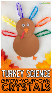 I love doing fun seasonal science experients to get kids excited about exploring the world around them. Thisturkey science experiment combines growing your own crystals with hands-on turkey activitiesfor November. Try thisthanksgiving activity for kids from toddler, preschool, pre-k, kindergarten, grade 1, grade 2, and grade 3 students with a couple common household items.